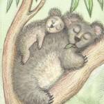 card1web_koala