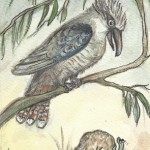 card3web_kookaburra