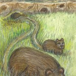 card5web_wombats