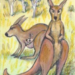 card7web_kangaroo